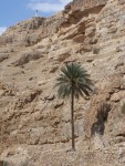 Wadi Qilt - I liked the contrast,  The palm,  low in the canyon,  and looking tall while the cross is way up at the top of the canyon, High and lifted up.