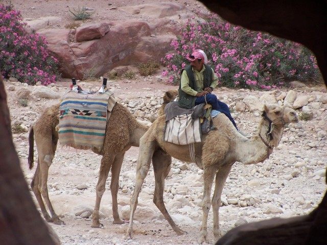Petra - Camels to ride