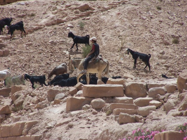 Petra - Goat and goat herder on donkey